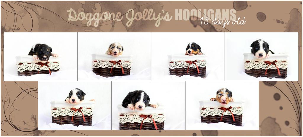 18 days old already! by jollyvicky