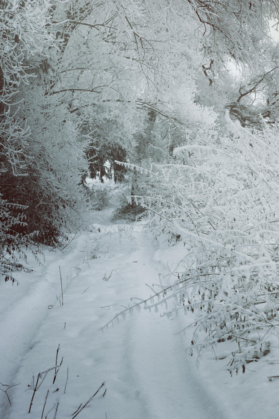 Winter Wonderland by SoranoKobayashi