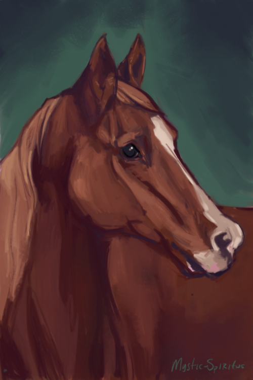 untitled horse portrait by QueerCoyote