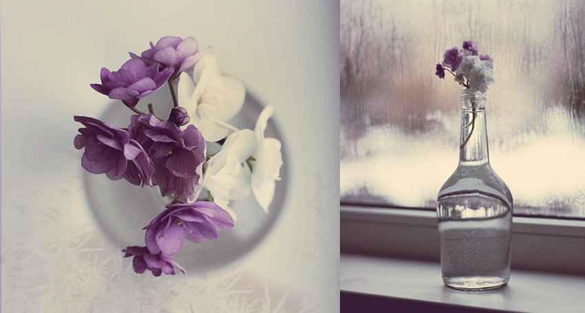 Violets... by mechtaniya