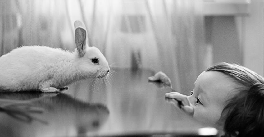 Rabbit of Pushistik by mechtaniya
