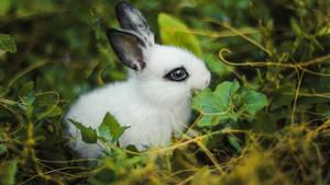 Rabbit spot)