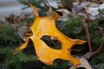 Oak Leaf Handmade Leather Mask