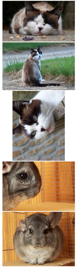 My pets 1-2