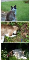 My pets 2-2