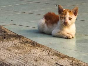 Hong Kong Kitty