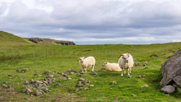 When Suddenly, Sheep