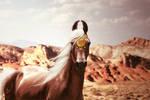 the desert dreams