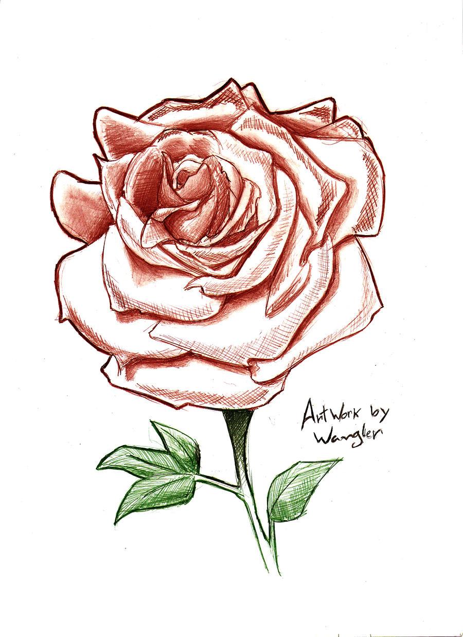 Rose by Wangler