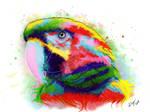 Macaw Rainbow Pet Portrait