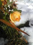 Winter's Embrace