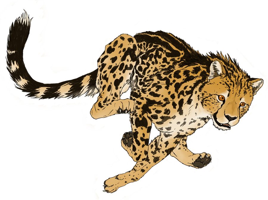 Related Keywords Amp Suggestions For King Cheetah Art