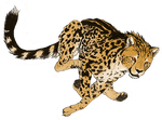 King Cheetah in flight