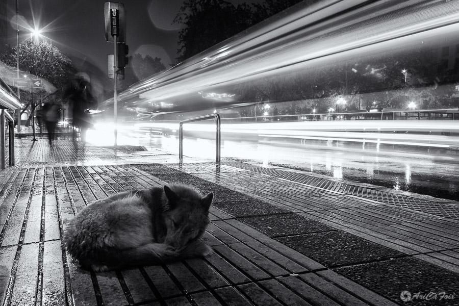 You look like rain by AriCaFoix