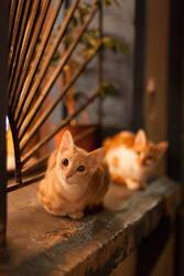 Los gatos de la ventana by AriCaFoix