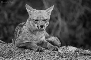 El mensaje del zorro
