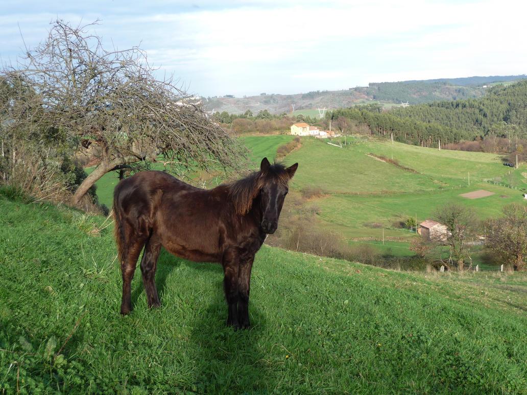 caballos_4 by abelgalois