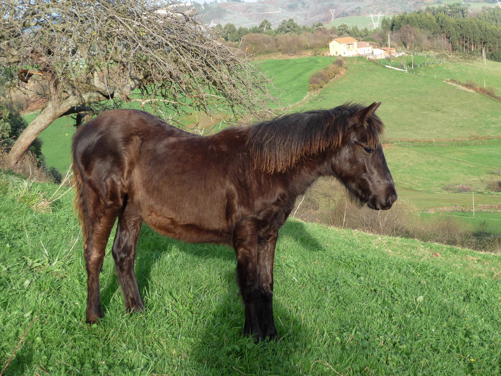 caballos_5 by abelgalois