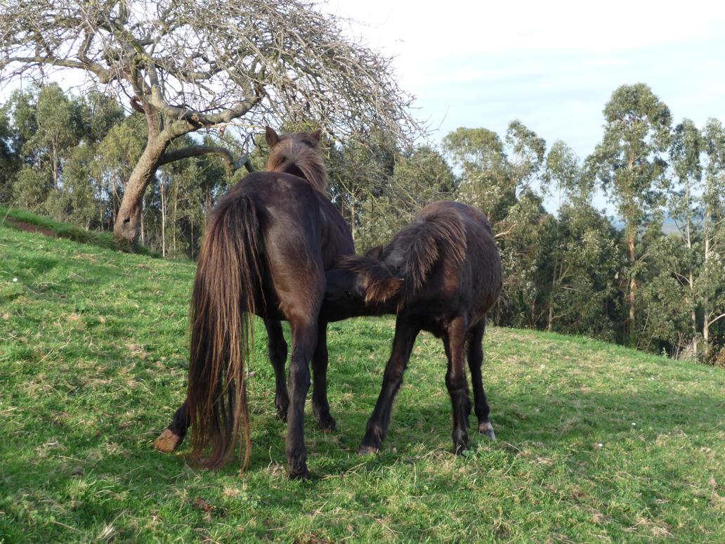 caballos_6 by abelgalois