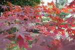 autumn_79