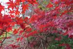 autumn_80