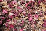 autumn_81