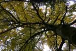 autumn_83