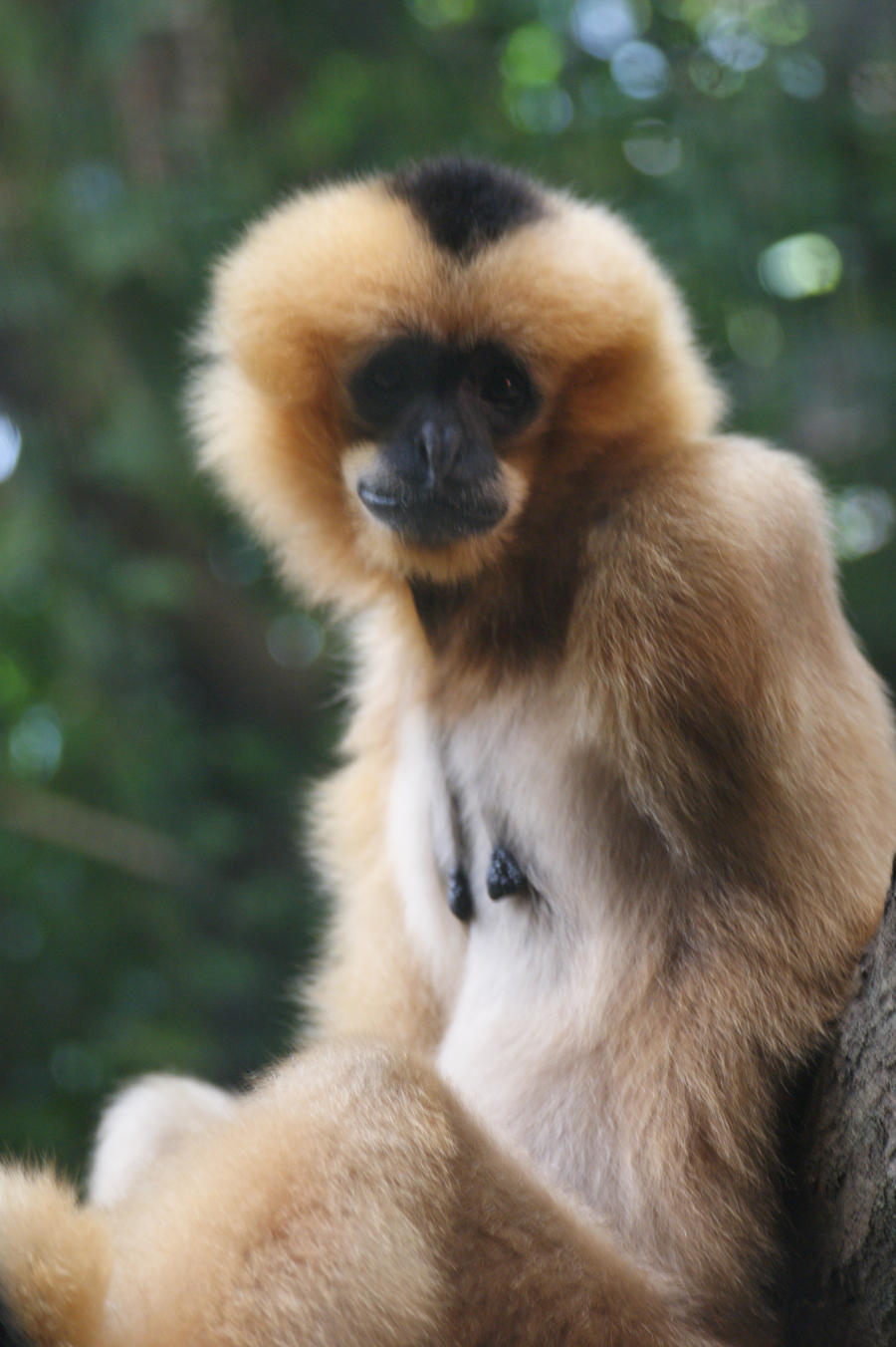 One Armed Gibbon by WoodenOx