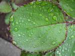 May raindrops, 3 of 7