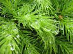May raindrops, 6 of 7