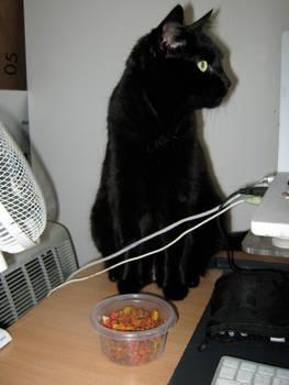 Curious cat, 1