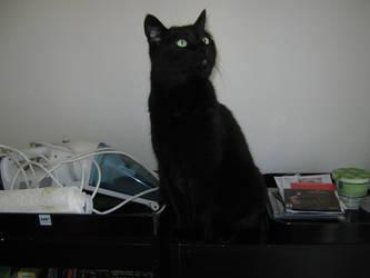 Curious cat, 2 by Cericonversion
