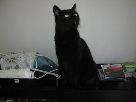 Curious cat, 2