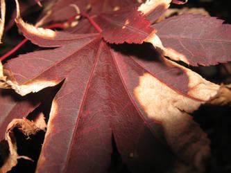 Flashlit leaf, 2 by Cericonversion
