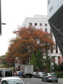 Fall arriving in Seattle