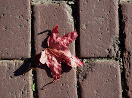 Leaf and bricks by Cericonversion