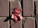Leaf and bricks