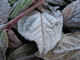 Frozen leaf, 2 by Cericonversion