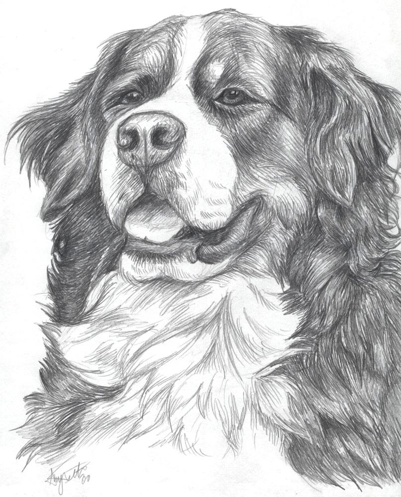 Bernese Mountain Dog By DemoDog On DeviantArt