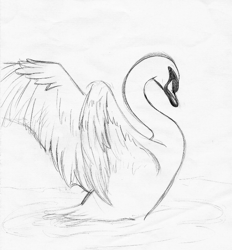 how to draw a swan for toddlers