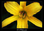 Mellow Yellow by ClockworkDesigns