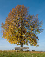 lovers bench - fall by ab-origine