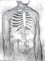 Skeletol Torso by tastydoll