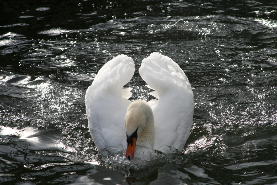Swan by the-other1