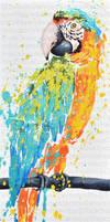 Jaunes et bleus du ara by JessicaSansiquet