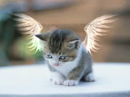 Cutie.Angel.Kitty