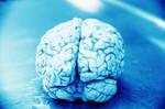 Human Brain Stock