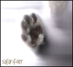 The Scanner's Paw