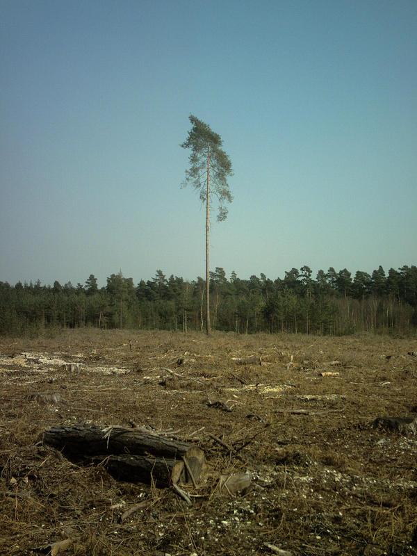 Deforestation by safarifiver