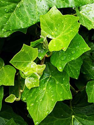 Wet Leaves #2 by Favenatig